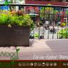 du-an-san-go-ngoai-troi-tecwood-tw150-coffee